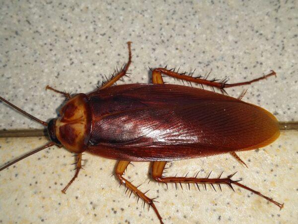 cockroach-pest-control-aaahomemaster-com-jpg