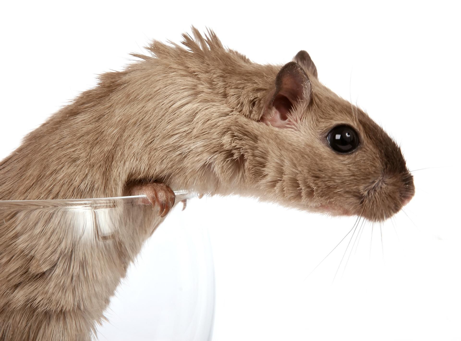 mices-pest-control-aaahomemaster-com-jpg